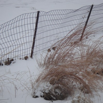 fence & grasses